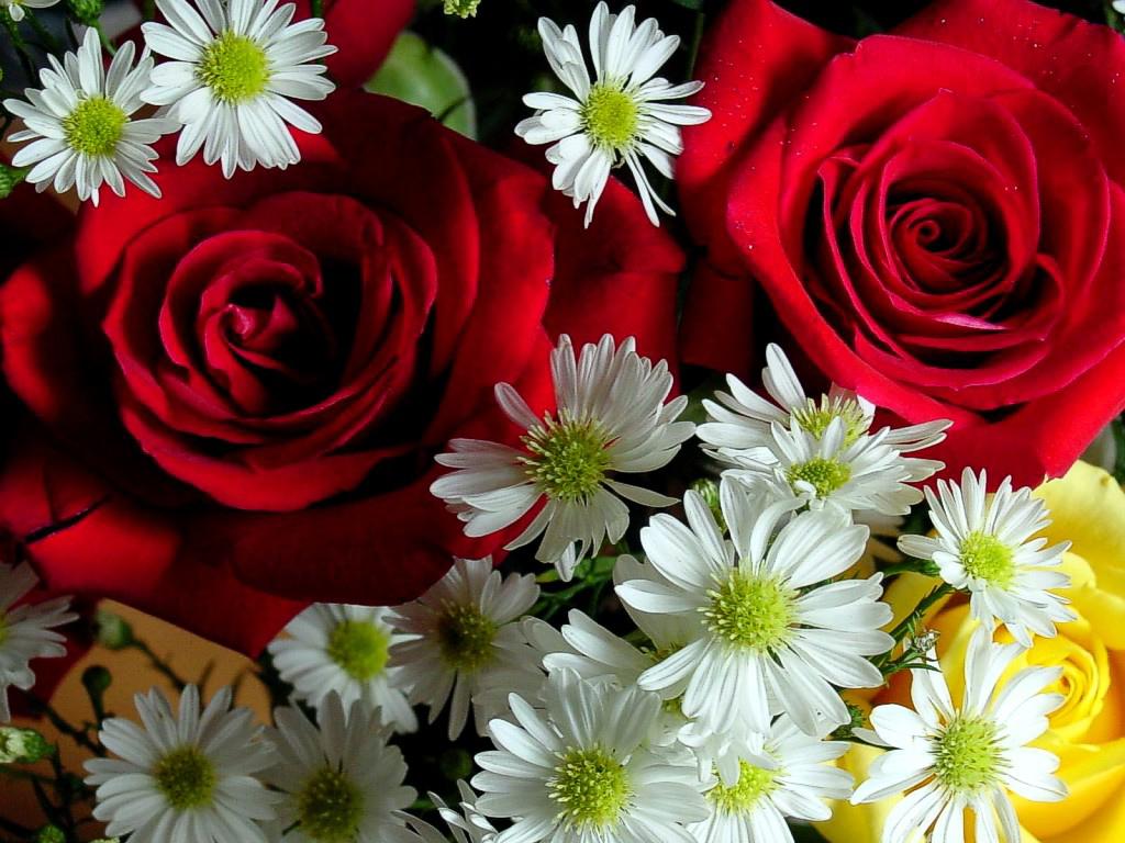 Frutto Del Nostro Amore Da Noi Due. Creati, Per Essere Felici. Guardare  Tutti I Giorni Queste Due. Rose Rosse Sempre Più Belle Che