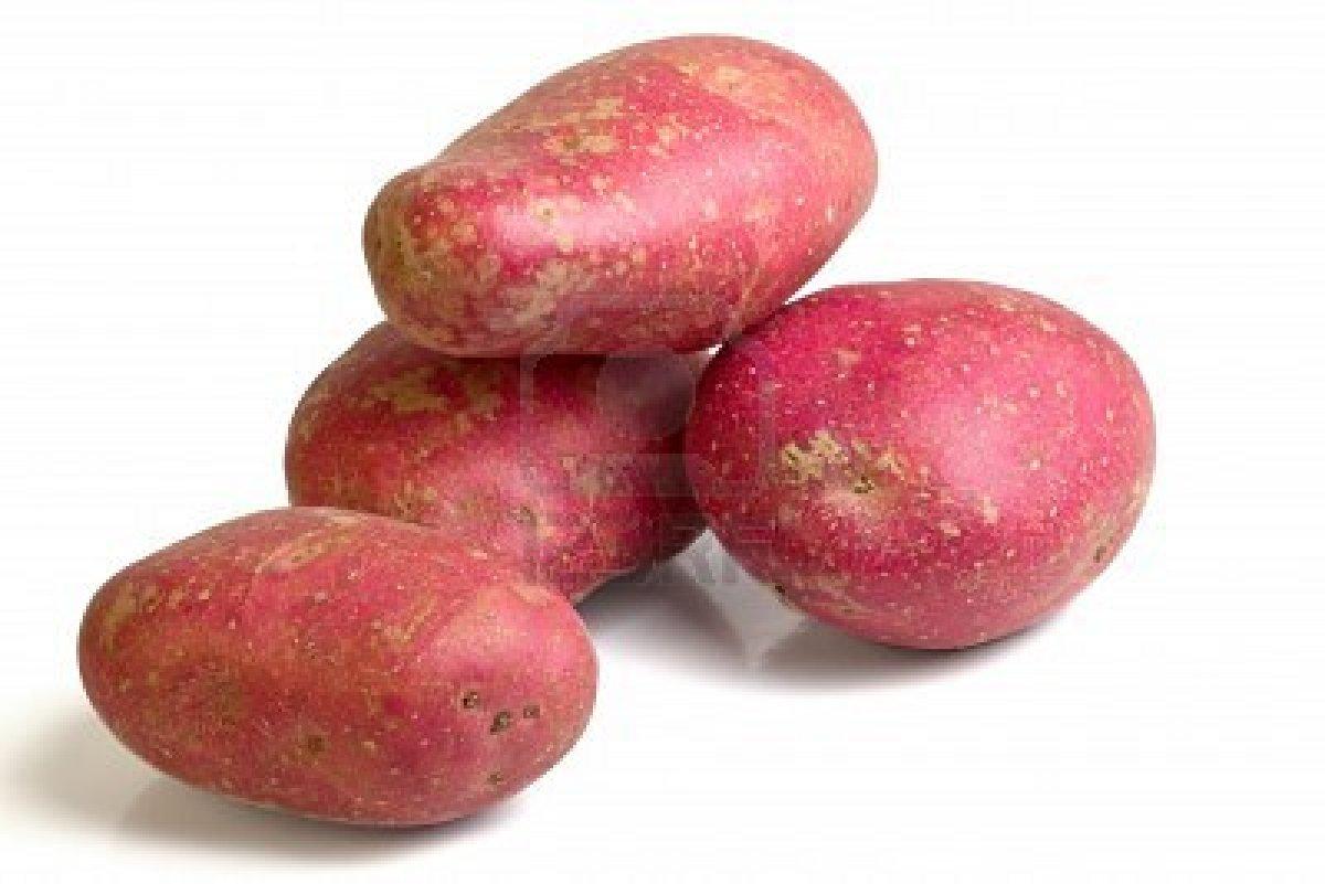 Rollo patatero por qu hay patatas mejores para fre r - Tiempo para cocer patatas ...