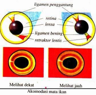 Sistem Indra pada Hewan