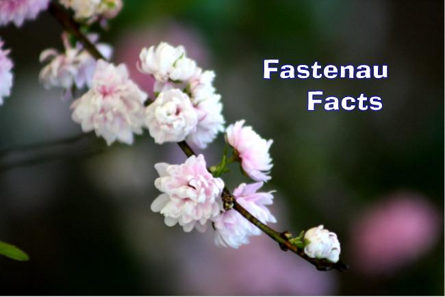 Fastenau Facts