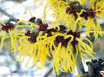 Kwiaty w ogrodzie w styczniu