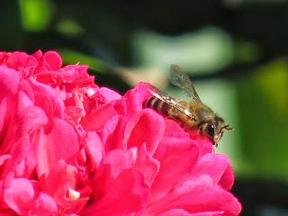Close-up Nature Photo - Canon PowerShot SX40 HS