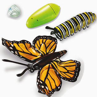 http://www.learningresources.com/product/inflatable+butterfly+life+cycle.do