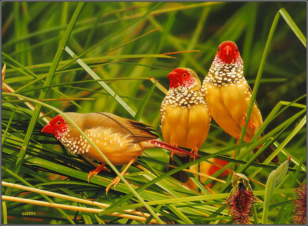 hd lovely birds wallpapers full hd wallpapers