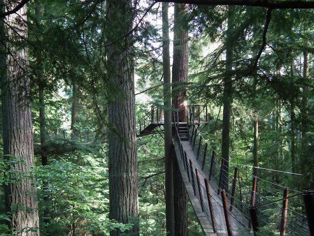 Observation Deck and rope-bridges built high in the trees at Capilano Suspension Bridge