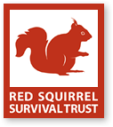 Our Red Squirrel