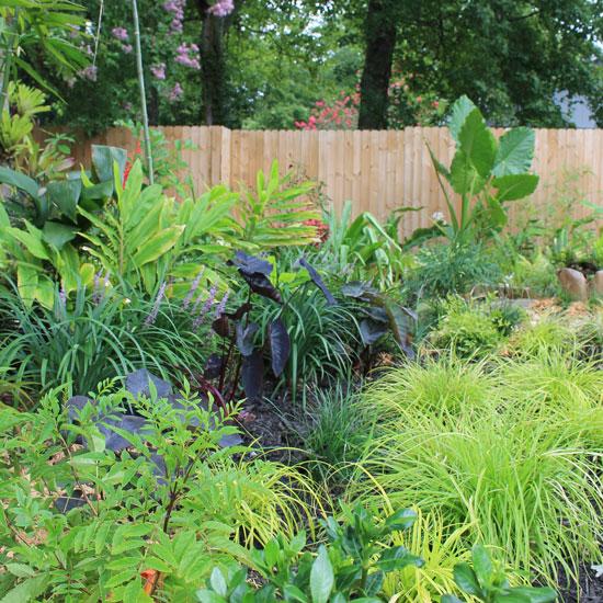 rainforest garden 7 ways