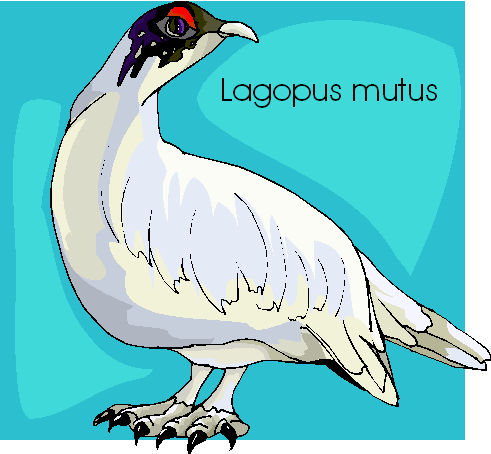 Lagopus Mutus Free Bird Clipart