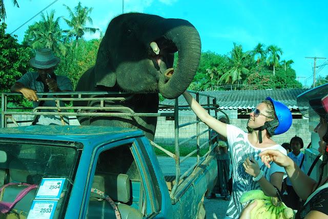Ручной слоненок.