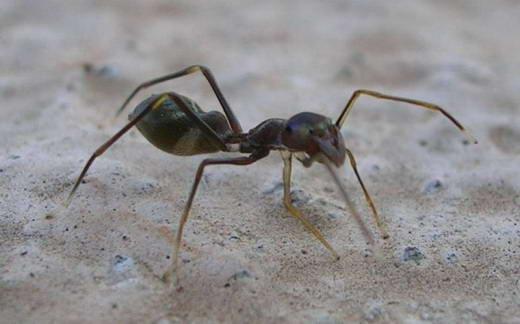 10 Kemampuan Super Yang Dimiliki Laba-laba [ www.BlogApaAja.com ]