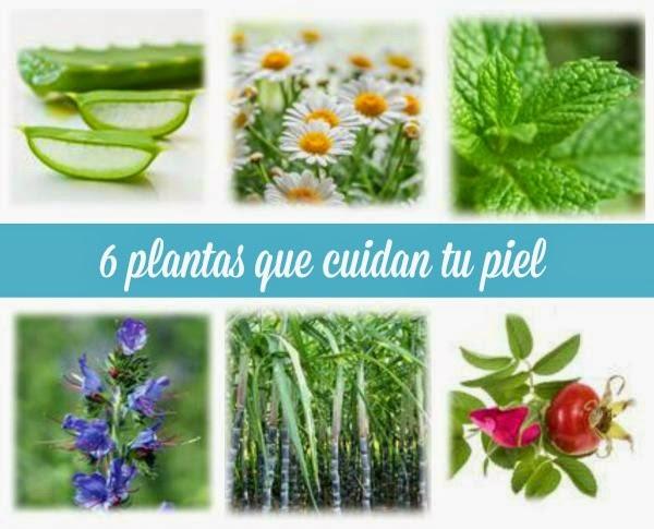 6 plantas que cuidan tu piel guia de jardin for Guia de plantas de jardin