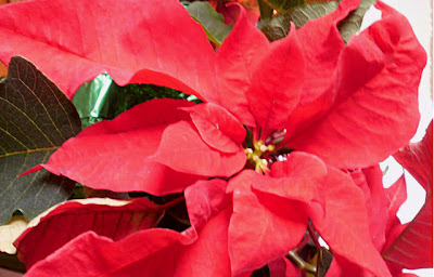 Holiday Inspiration, Holiday Flowers, Holiday Blooming Flowers,