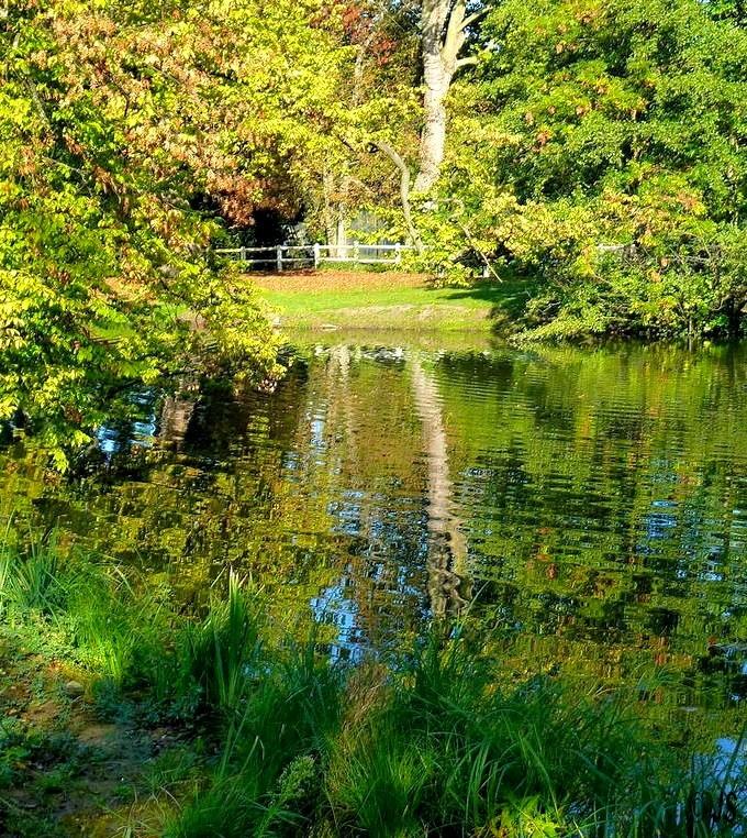 P 39 tits clics le parc des ibis au v sinet dans les for Parc animaux yvelines
