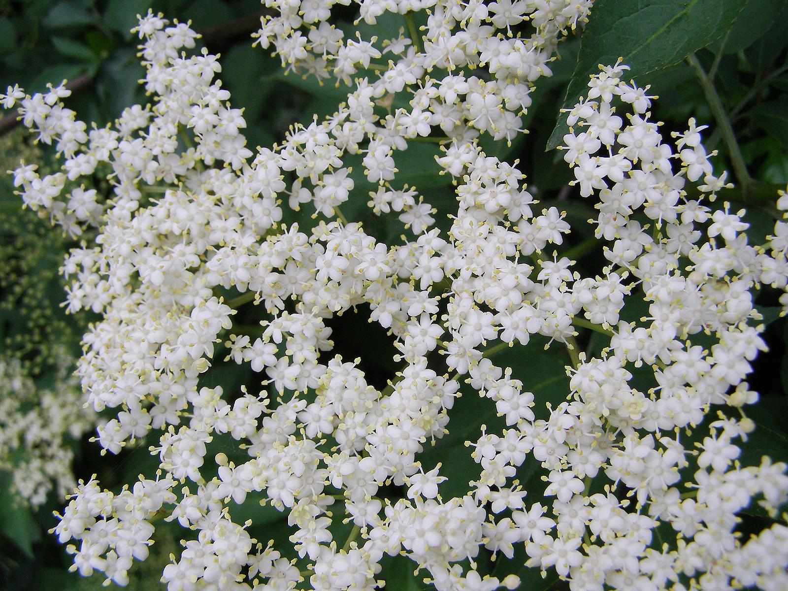 Random Jottings White Flowers