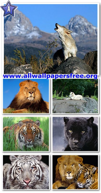 80 Amazing Wildlife Wallpapers 1280 X 1024 [Set 1]