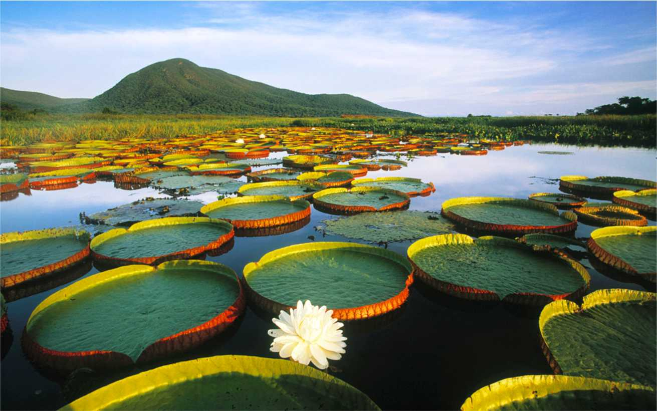 Amazon River (10 Friday Photos) PlanetSave 100 best photographs of all time