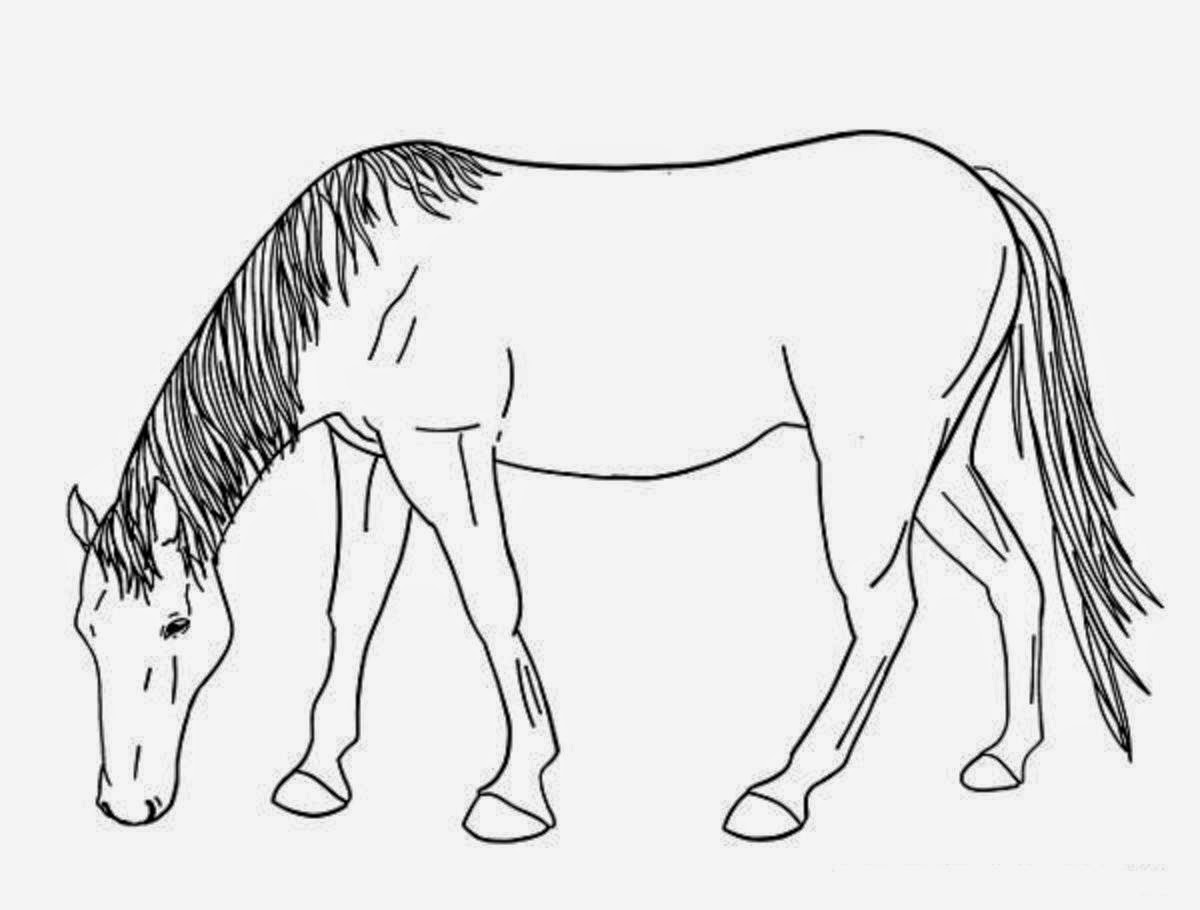 Colour Drawing Free Wallpaper Horse For Kid Coloring Drawing Free