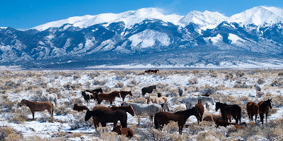 Horses in front of the Sangre de Cristos