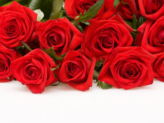 Beautiful Red Roses Flowers Collections 17