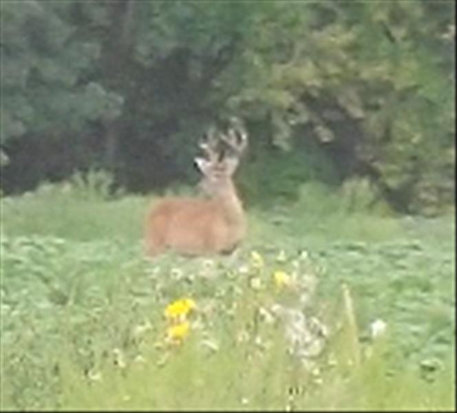 Blog de chasse au chevreuil l 39 arc lever et coucher du - Lever et coucher du soleil est ouest ...