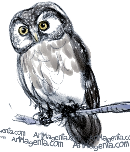 Boreal Owl sketch painting. Bird art drawing by illustrator Artmagenta