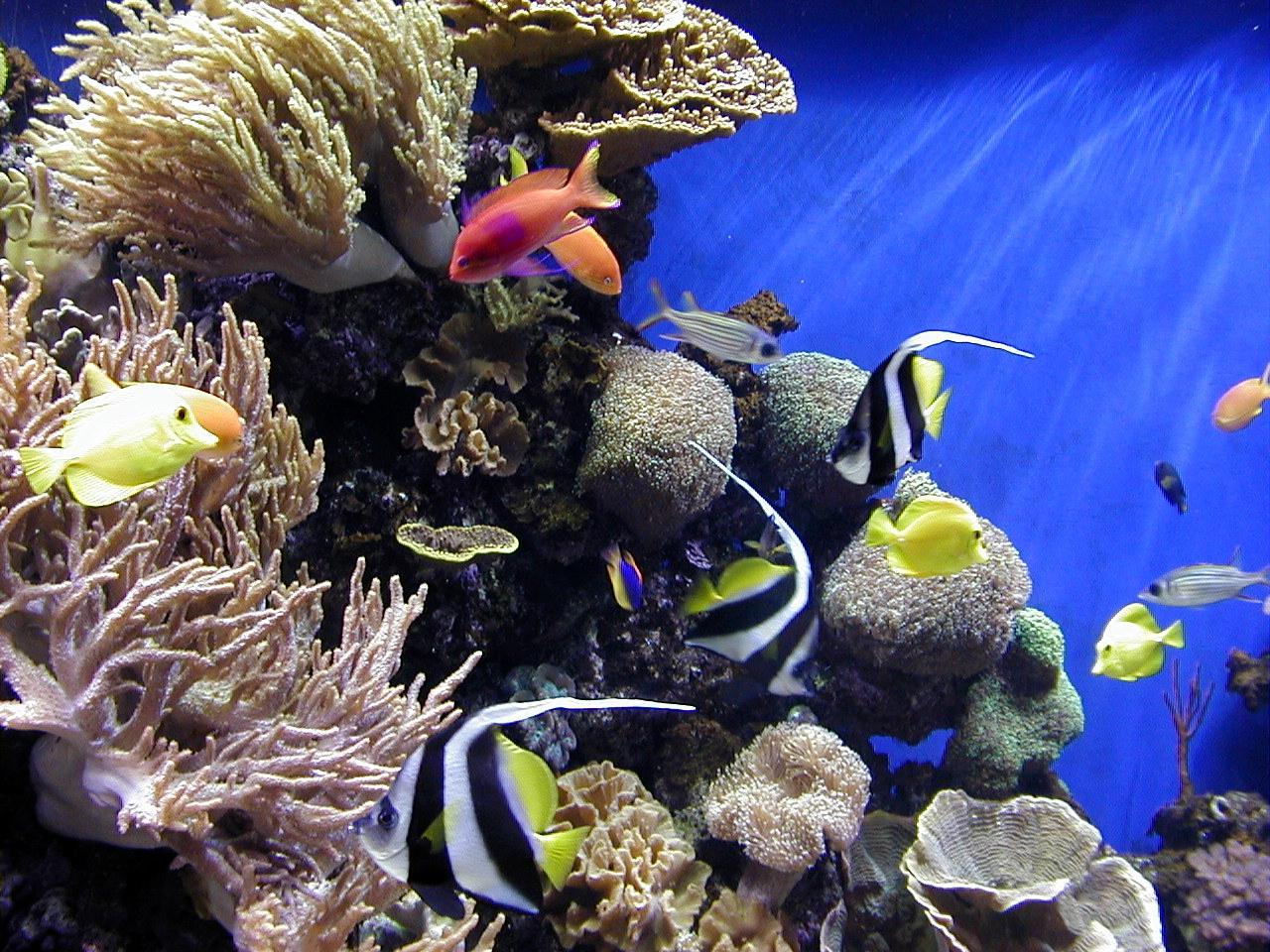 Aquarium Hintergrundbilder Kostenlos - Google Play Store: Die besten und schönsten
