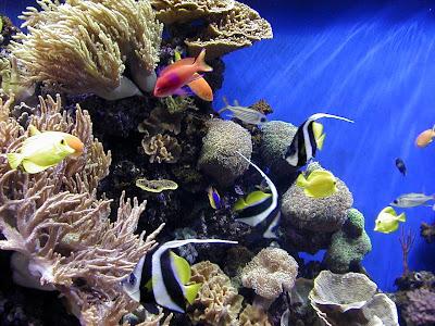 Christine O&#039Donnell: Monterey bay aquarium wallpaper