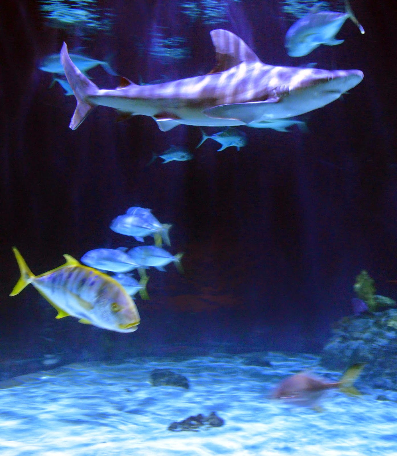 Point Defiance Zoo And Aquarium Summer 2014