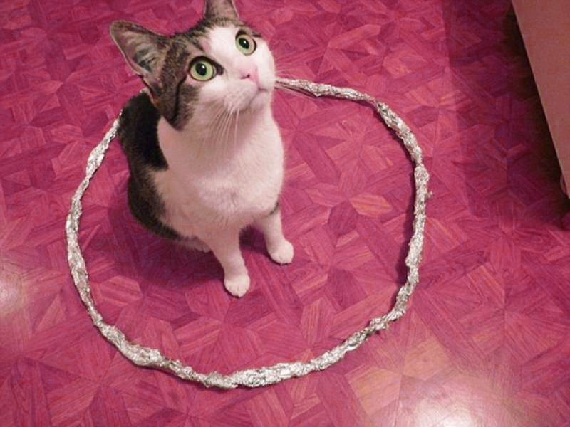 cat do not come out of circle