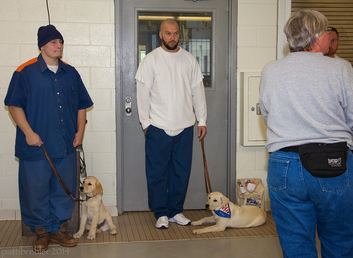 A man wearing the blue prison uniform and a blue knit cap is standing on the left facing the camera. His hands are at his side and he is holding a leash in his right hand. A small yellow lab/golden retriever mix puppy is sitting on his left side. Another man, wearing blue prison pants and a long-sleeve white t-shirt is standng in front of a door with a window in it. His right hand is in his right pant pocket, and his left hand is holding a leash attached to a young yellow lab puppy that is lying on the tile floor on his left side. The puppy is facing the man and is wearing the blue Future Leader Dog bandana. A woman wearing blue jeans and a grey sweatshirt with a treat pouch around her waist is standing on the right with her back to the camera.