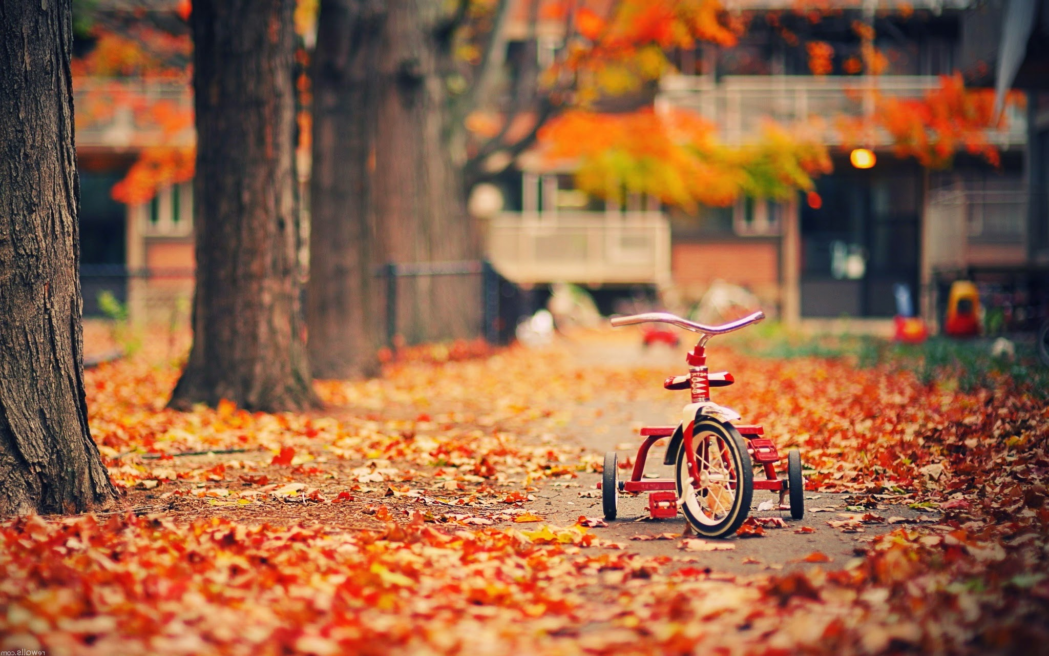 Alone Tricycle and Leafs, Trees HD Wallpaper