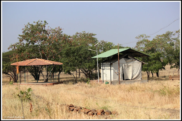 Tent stay at Mayureshwar wildlife sanctuary
