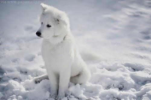12 Cute Dogs Heart Melting Photos