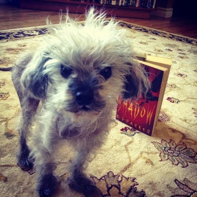 A fuzzy grey poodle, Murchie, stands facing the camera in an accusatory fashion. Behind him is a mass market paperback copy of Shadow, featuring the black silhouette of a crow against an orange background.