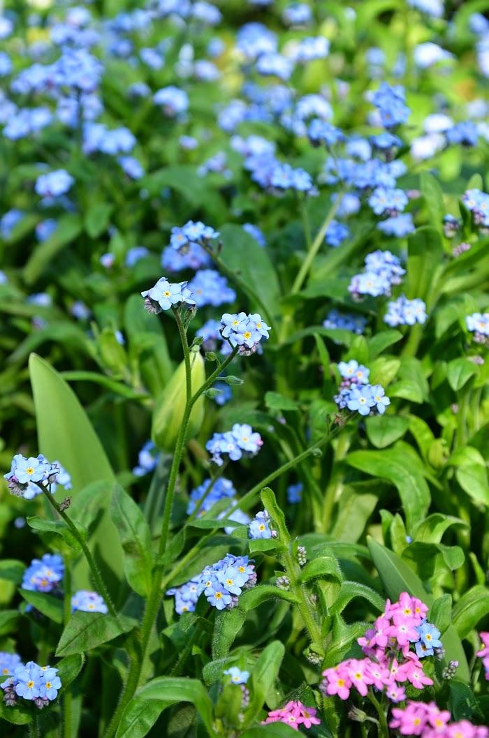 Весна в Германии, фото, Ольга Граф