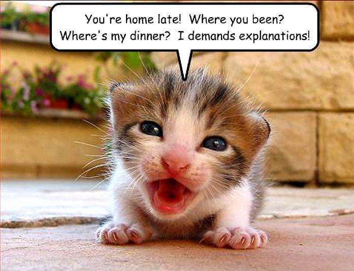 Cute And Funny Pictures And More The Cutest Hungry Baby Cat Ever