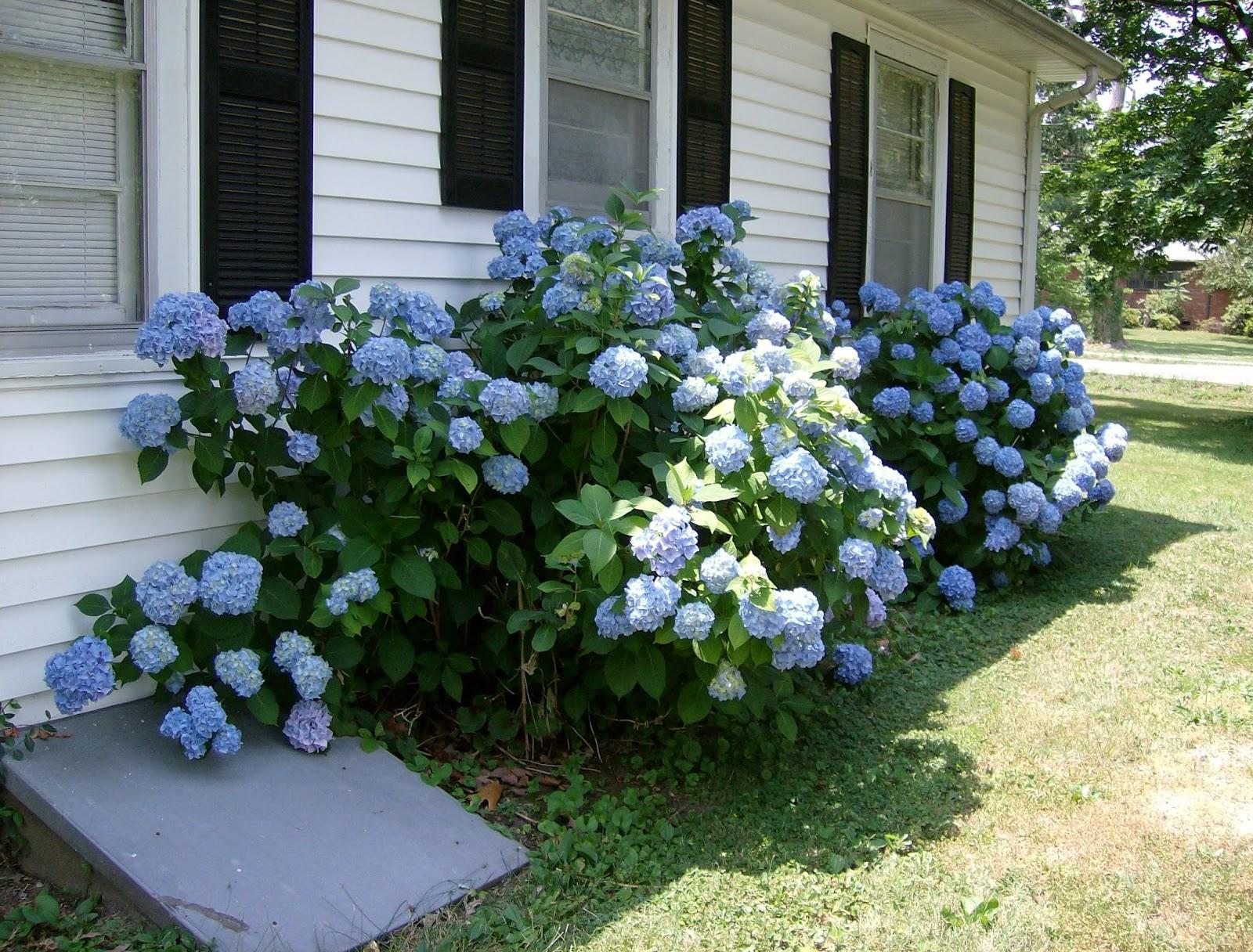 Gardeners Companion Flowering Shrubs Add End Of Season