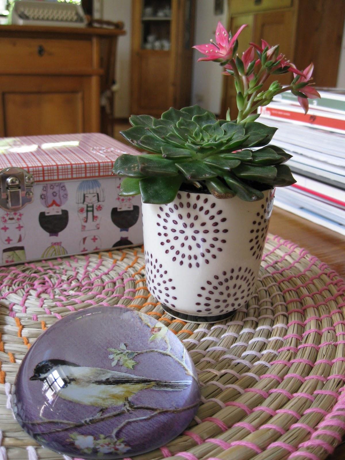 fr ulein trollblume wohnen und dekorieren sukkulentenliebe. Black Bedroom Furniture Sets. Home Design Ideas