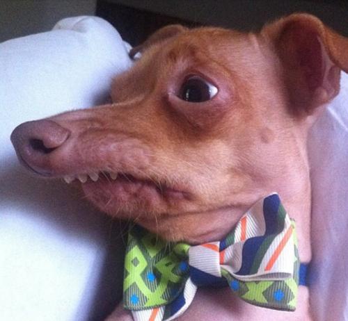 ¿Este perro no es Ayudante de Santa Claus?