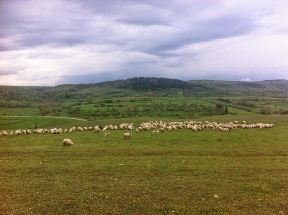 La fermă...