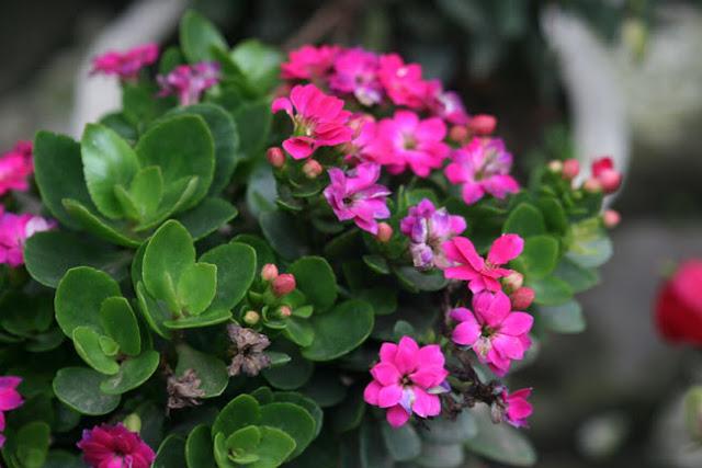 Chữa trị mụn bọc cực đơn giản bằng lá sống đời