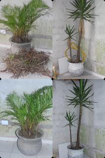 plantas cuidadas