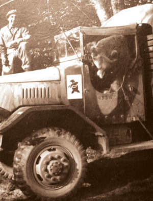 WW2 Private Wojtek in Jeep - Polish Army 2nd Polish Corp