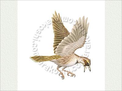 aves del cretaceo Sinornis