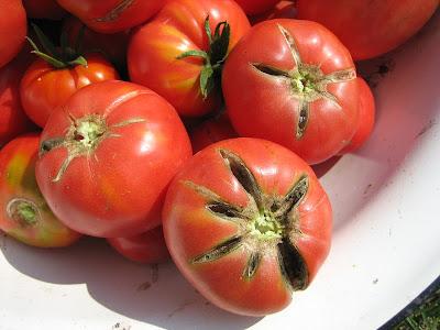 почему трескаются томаты