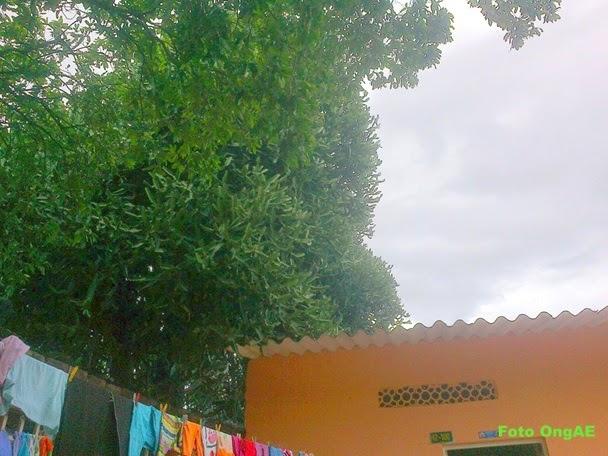 Derecho peticion a Alcalde de Cucuta Tumba y retiro desperdicios arbol en situacion de peligro
