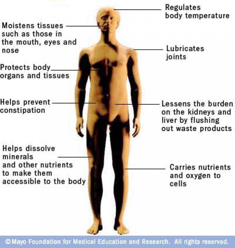 Water is the lubricantof all moving parts in the body  Allcells are    Dehydration Symptoms