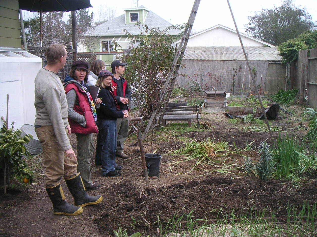 permaculture archives chickweed patch