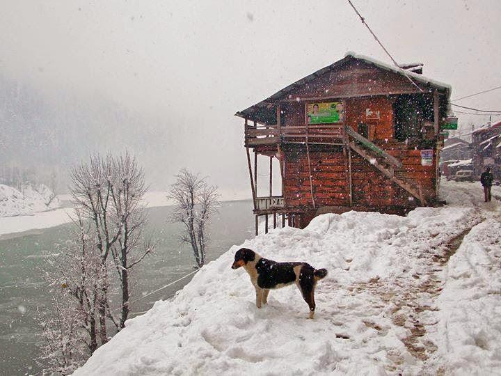dog snowfalling sharda