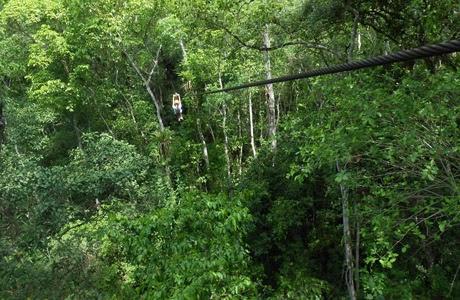 canopy, Puerto Vallarta, Jalisco